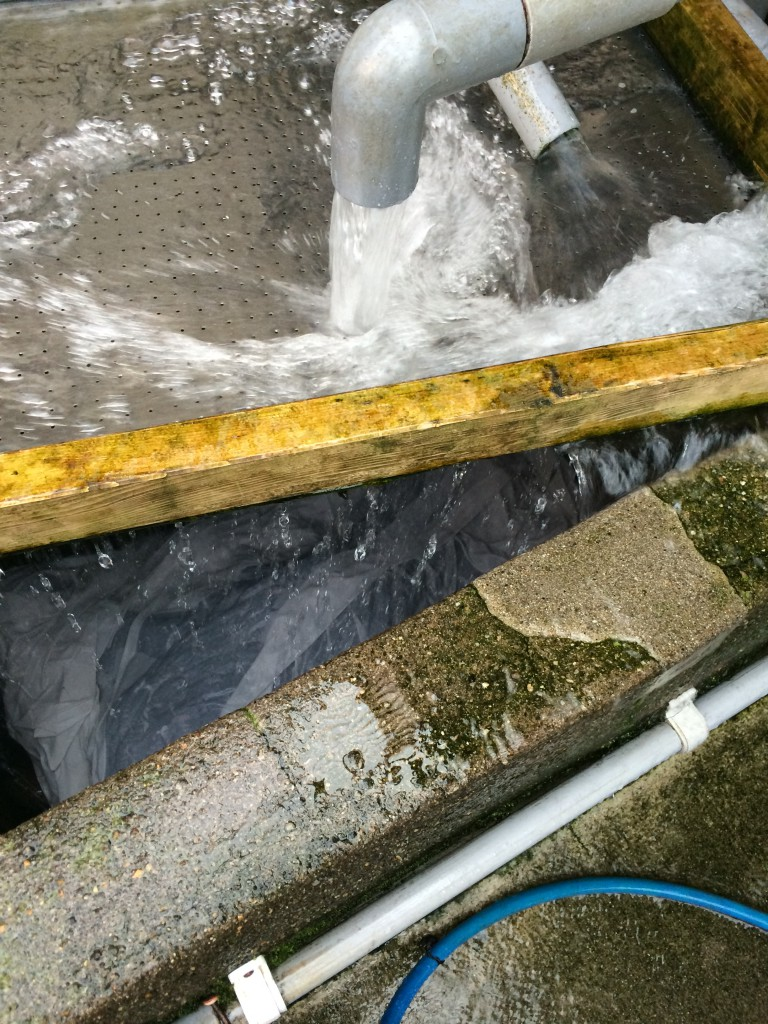 H26.4.8水洗